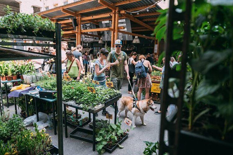 Anker't Sunday flower market