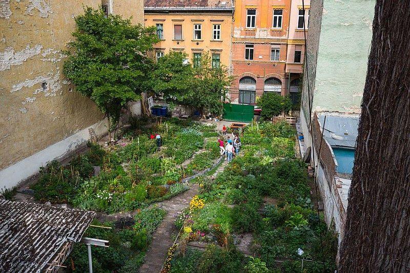 Community garden in Budapest