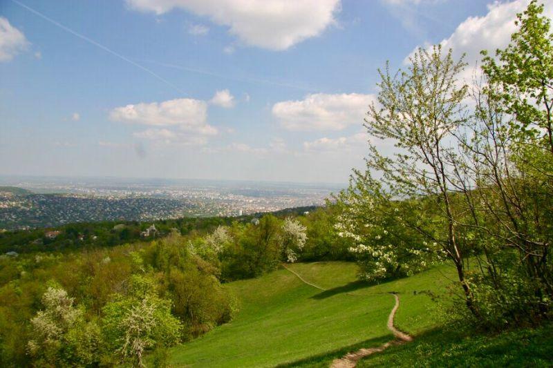 Buda Hills Normafa